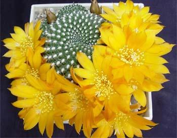 kaktus.ua