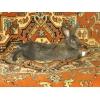 Домашние животные - кролики на продажу