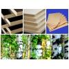 Оптово-розничная торговля плитными лесоматериалами
