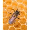 Продаю мёд с доставкой