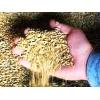 Продаю оптом зерно