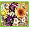 Рассада однолетних цветов,     многолетники,     лилии