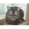 Вязка животных - котов