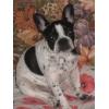 Украли собаку,  пожалуйста,  помогите найти